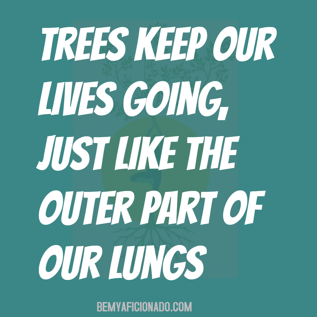 Trees keep our lives going, just like the outer part of our lungs.